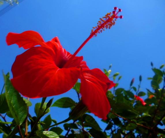 7. flor roja