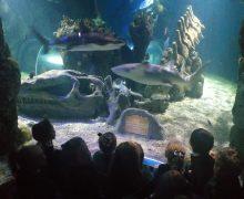 Visita a Sea Life (E.I)