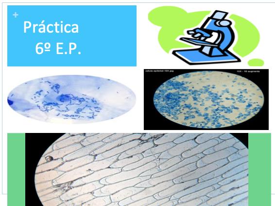 Práctica de Ciencias Naturales en 6º E.P. Células y tejidos